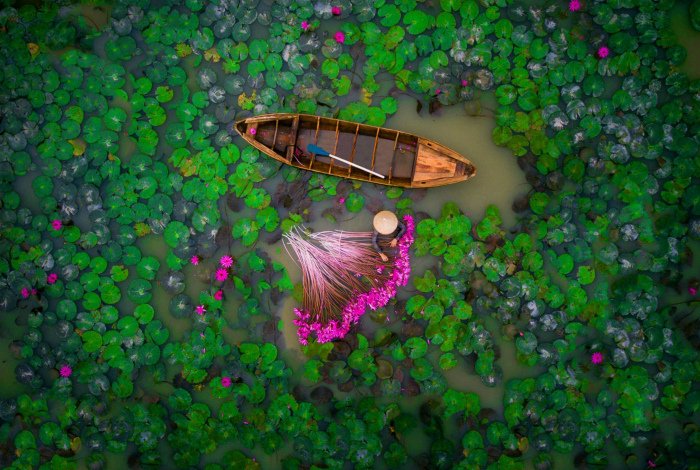 Лилии в реке Меконга.