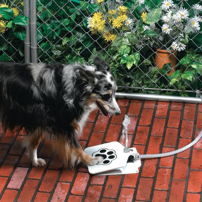 Фонтанчик с питьевой водой.
