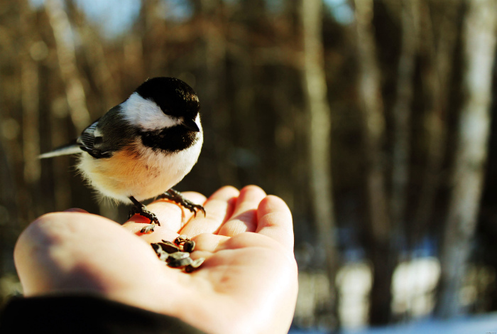 Птицы не справляют малую нужду.
