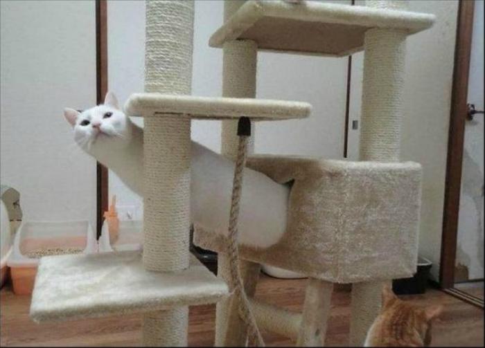 Забавный котик.