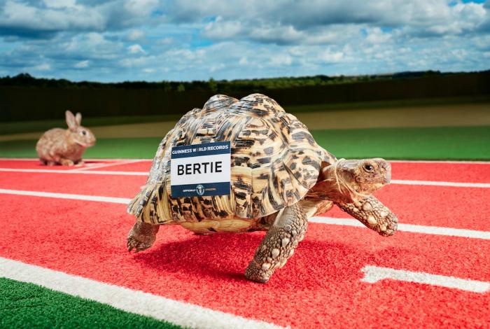 Черепаха Берти пробежала 0,28 метров за одну секунду и установила мировой рекорд.