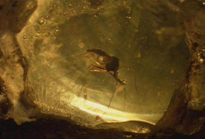 ДНК может хранится в янтаре тысячи лет. | Фото: Jurassic Park wiki - Fandom.