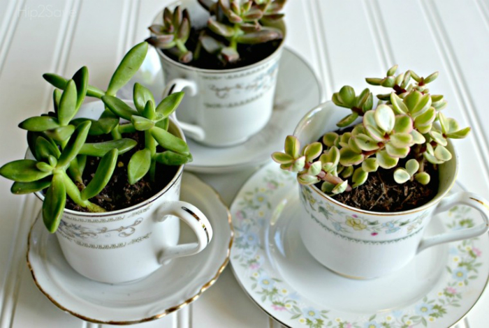 Старые ненужные чашки можно превратить в стильные цветочные горшки.