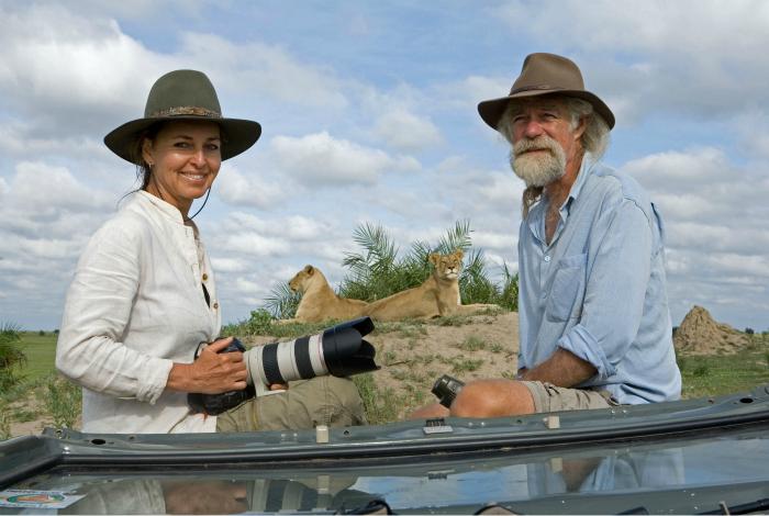 Пара фотографов снимают величественных львов.