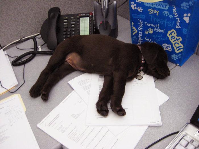Устал принимать телефонные звонки.