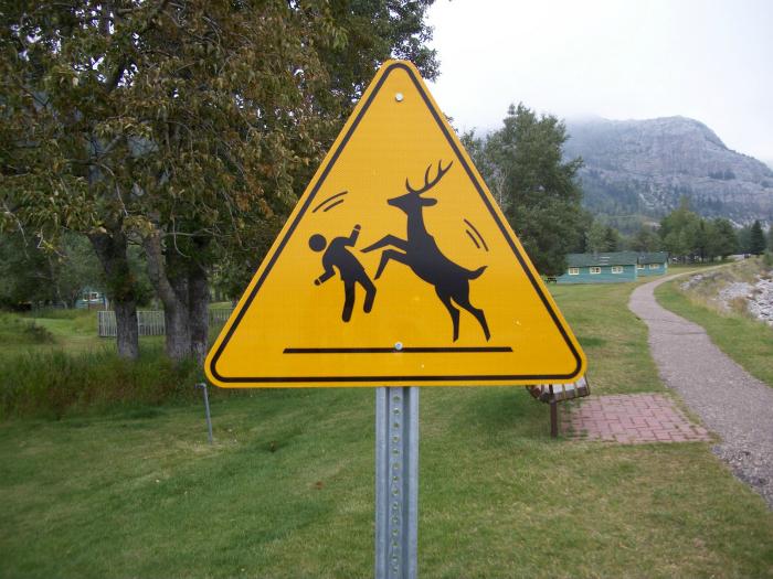 Опасные олени.