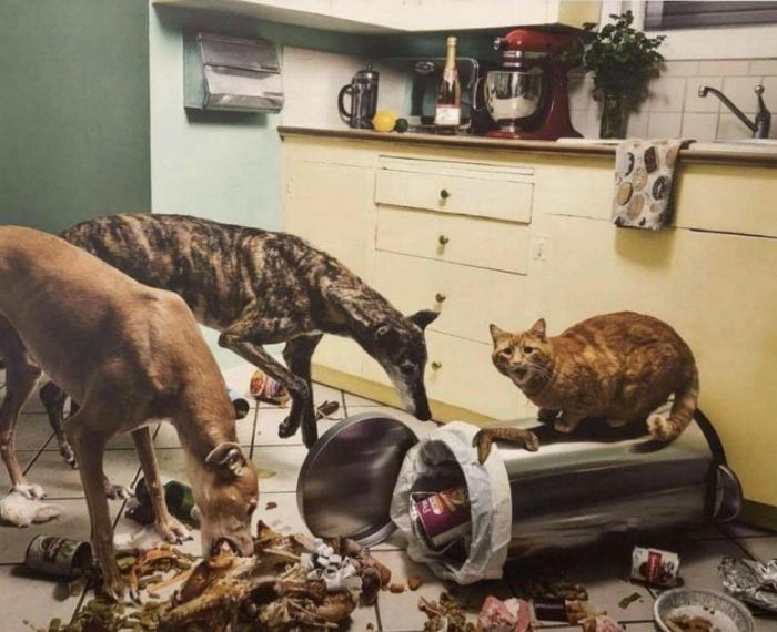 Кажется, кот что-то задумал! | Фото: Zefirka.