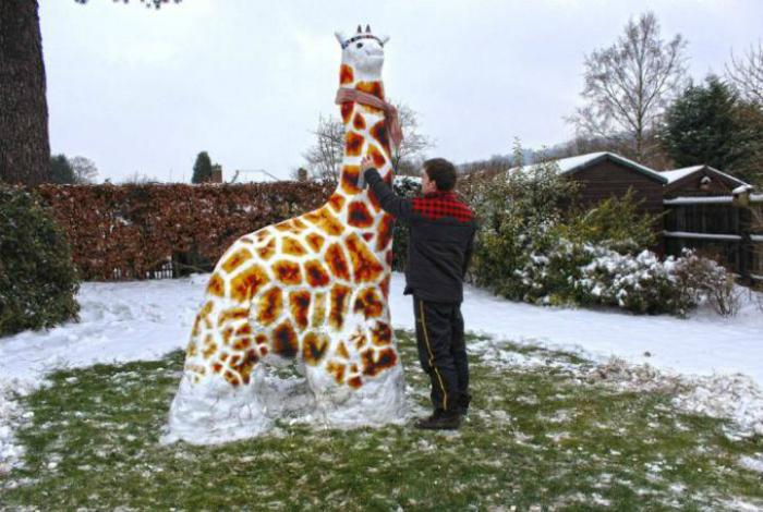 Самый морозоустойчивый жираф.