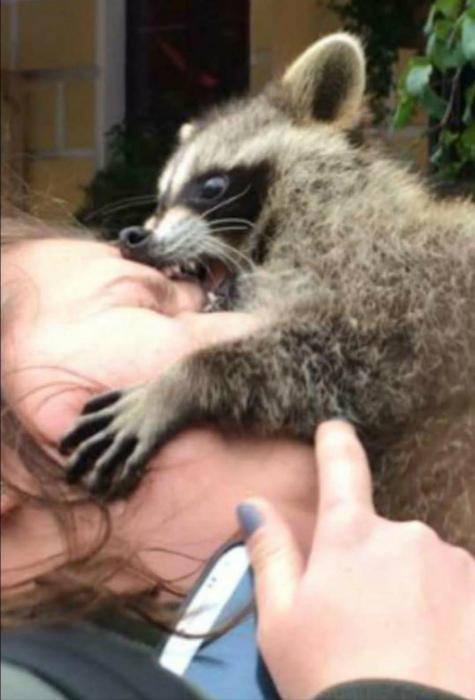 Страстный «поцелуй» милейшего создания. | Фото: Reddit.