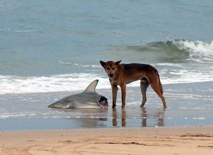 Сыт по горло этими акулами.