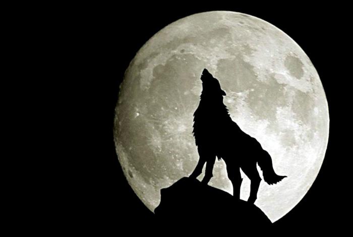 Волки воют на луну. | Фото: Mi Community.