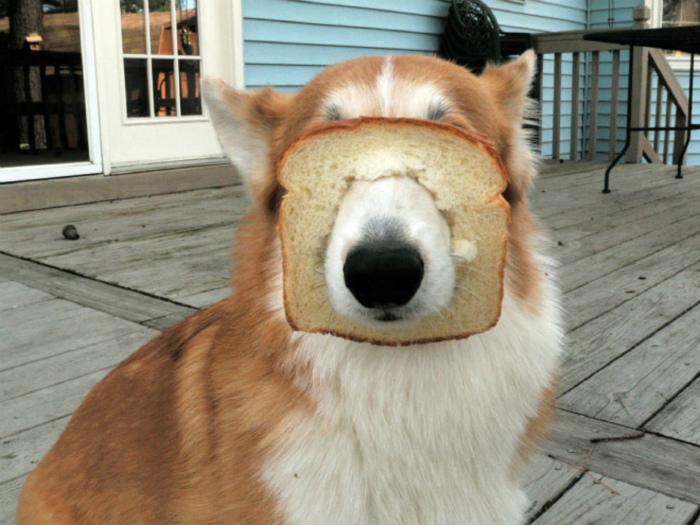«И тут я вспомнил, что не люблю хлеб!» | Фото: tollebild.com.