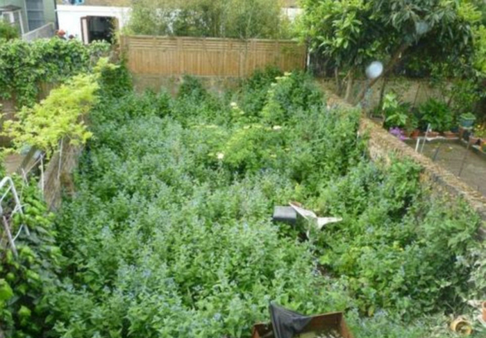 Запущенный сад.