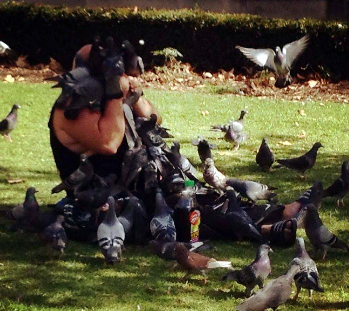Дивный случай единения человека и птиц на Novate.ru. | Фото: Zaxid Media.