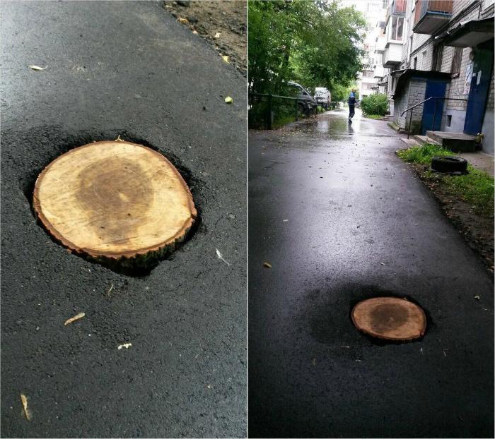 Пенек... В память о погибшем дереве. | Фото: Reddit.