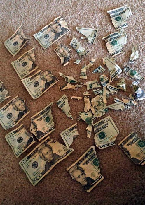 Когда финансы приумножились, но не настолько, как хотелось бы. | Фото: viralgossip.