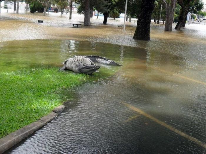 Novate.ru предупреждает, в городе вы можете встретить крокодила. | Фото: Báo Mới.