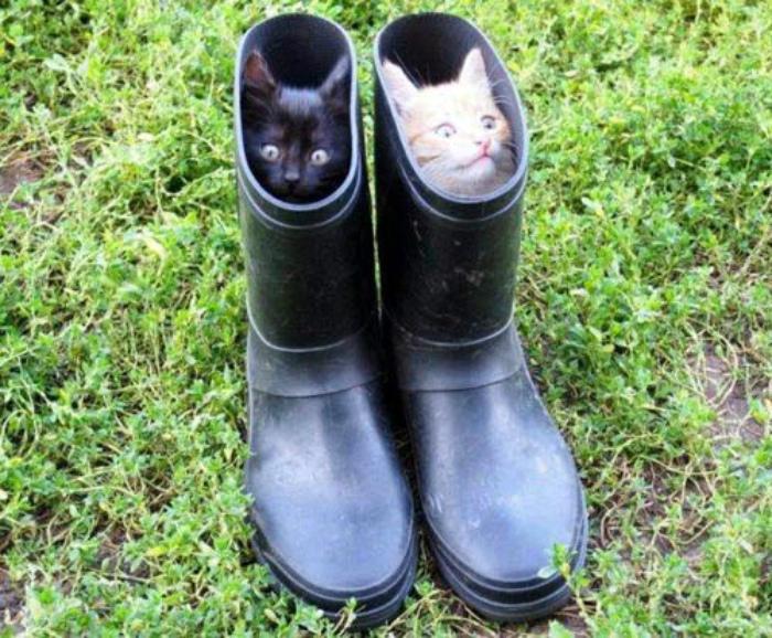 Коты в сапогах.