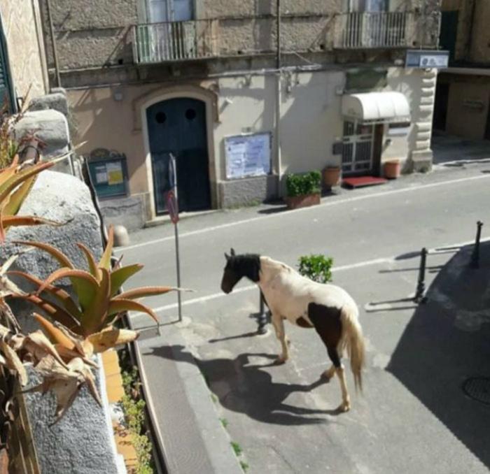 Одинокая лошадка... | Фото: Upsocl.