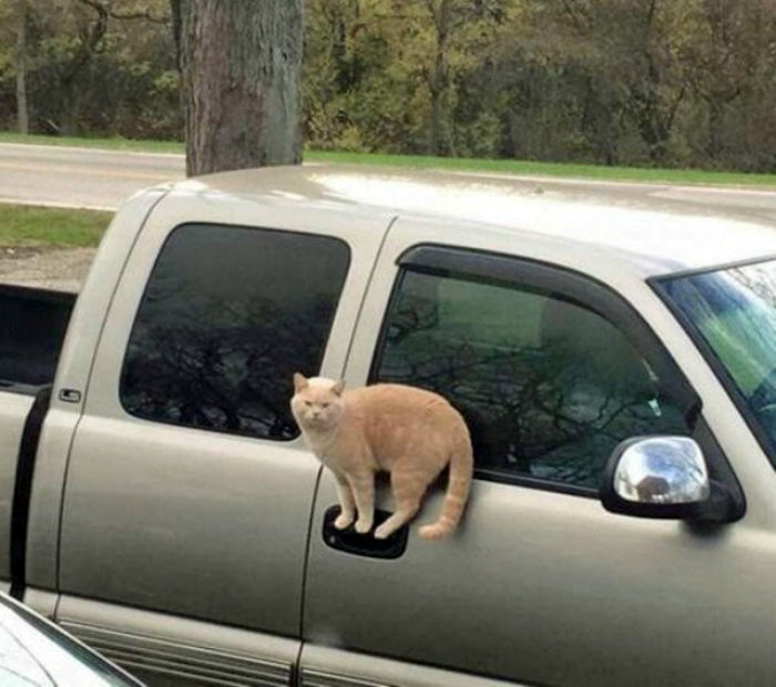 Novate.ru искренне недоумевает, как кот это делает! | Фото: Pinterest.