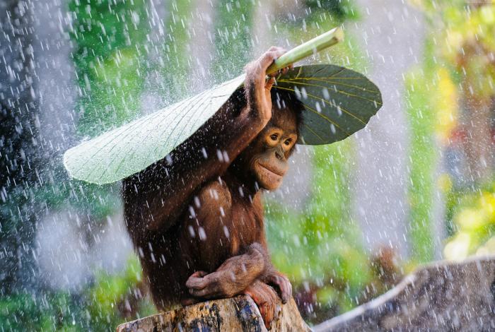Тропический дождь на Бали.