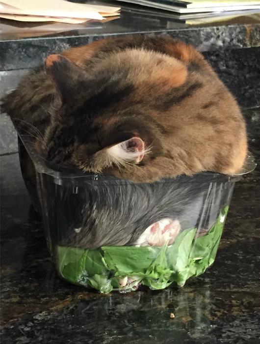 Кот в салате.