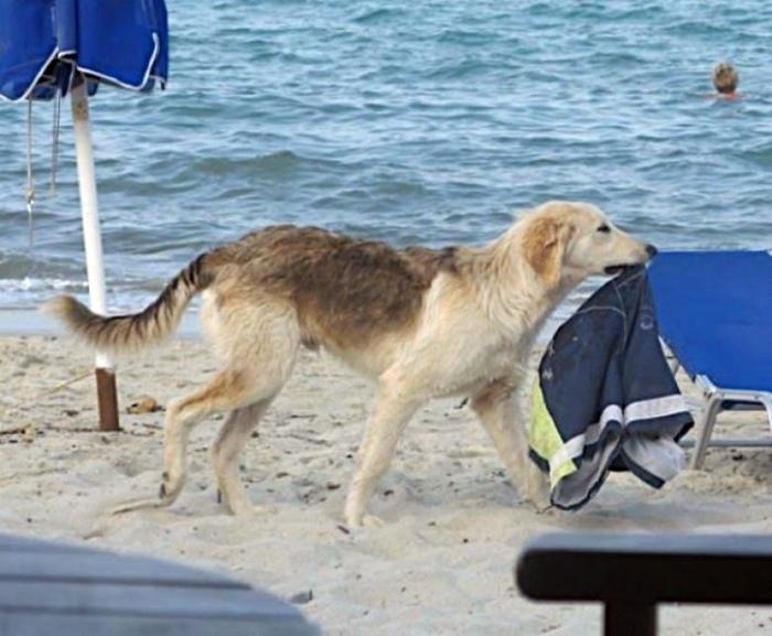«Шарик, ну ты и собака!»   Фото: SivriZEKA.