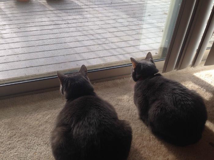 Будьте бдительны, черные коты наблюдают за вами!