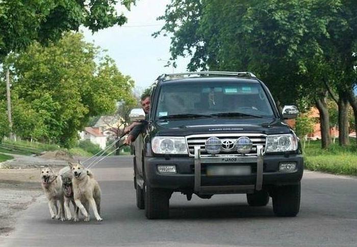 Прогулка с собаками.