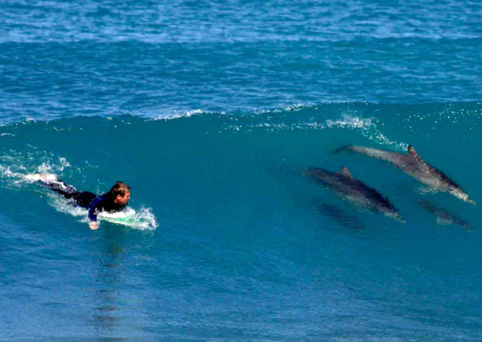 Наперегонки с дельфинами.