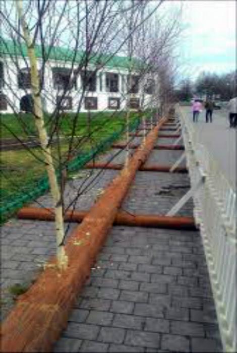 Возвращение деревьев.