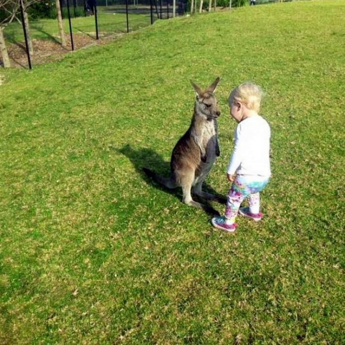 Ребенок и кенгуренок.