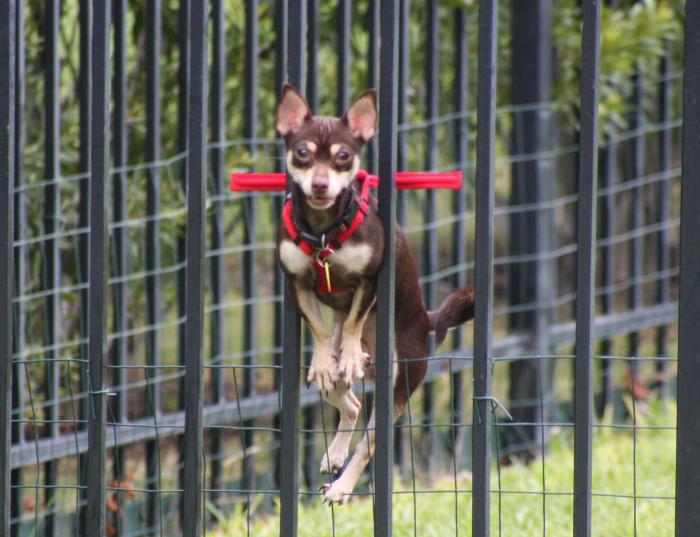Собачий ошейник с ограничителем. | Фото: Pinterest.