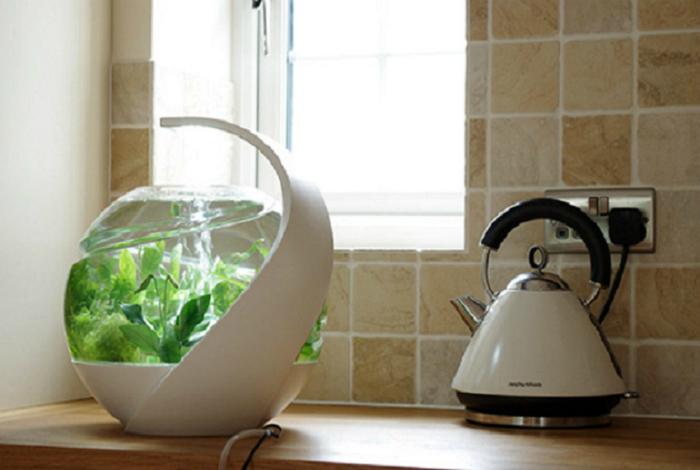 Аквариум Avo, который не нуждается в регулярной чистке и замене воды.