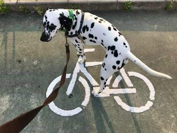 Сел на нарисованный велосипед и поехал.