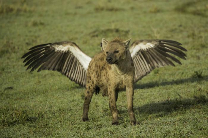 С крыльями совсем другое дело...