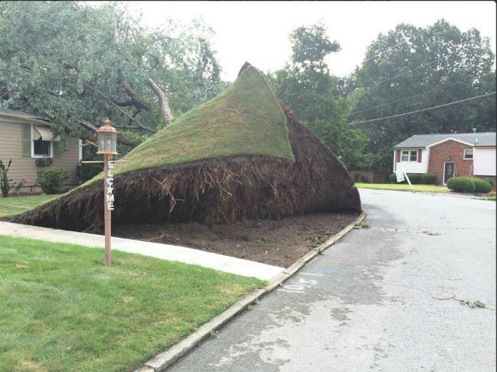 Что-то газон сегодня штормит.