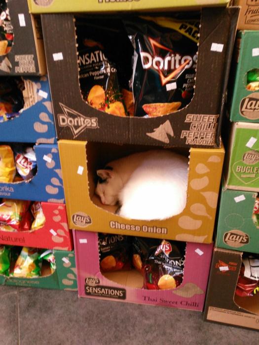 Неожиданная находка в ящиках с чипсами.