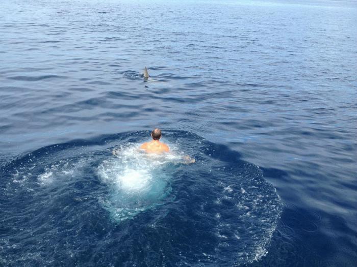 Novate.ru сообщает: увидеть в водоеме торчащий плавник - к беде! | Фото: Bruins Nation.