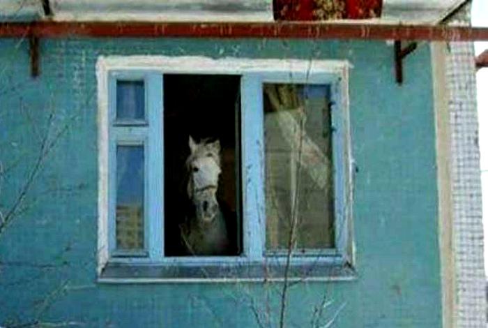 Когда твой сосед конь.
