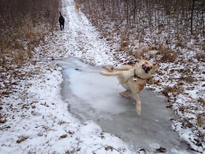 Бежал, бежал и подскользнулся. | Фото: Pinterest.