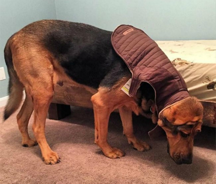 Одежка на собаку.