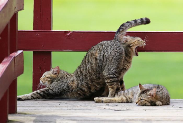 Какой-то подозрительный кот. | Фото: Karma Decay.