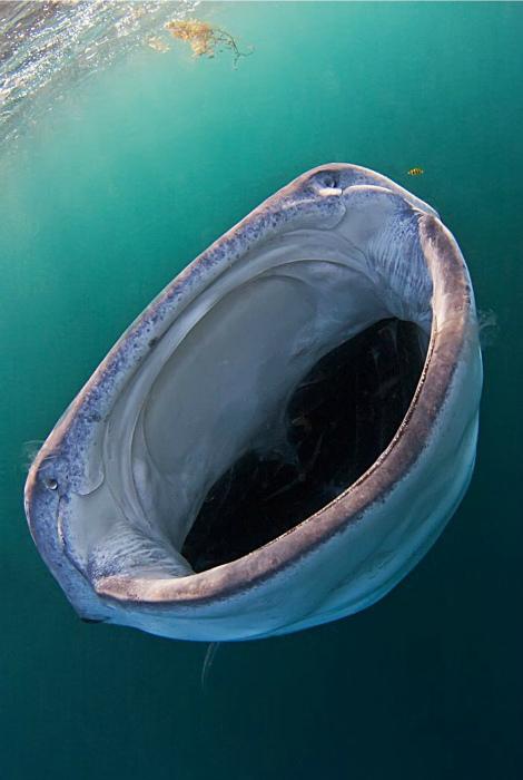 «Прелестная» рыбка.