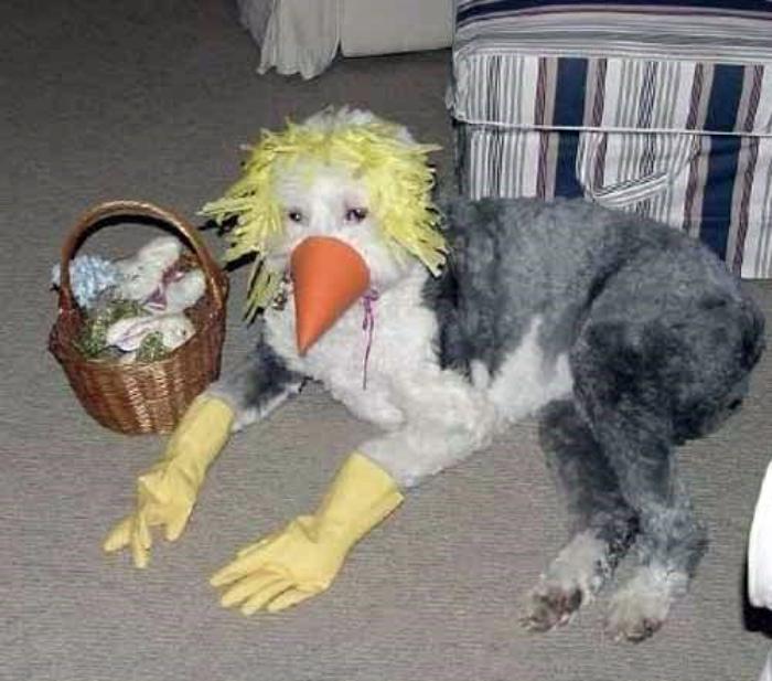Собака в уморительном костюме.