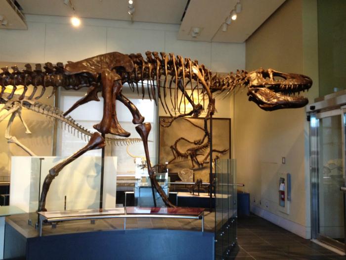 Новоиспеченные граждане Канады имеют право бесплатно посещать музеи в течение года.