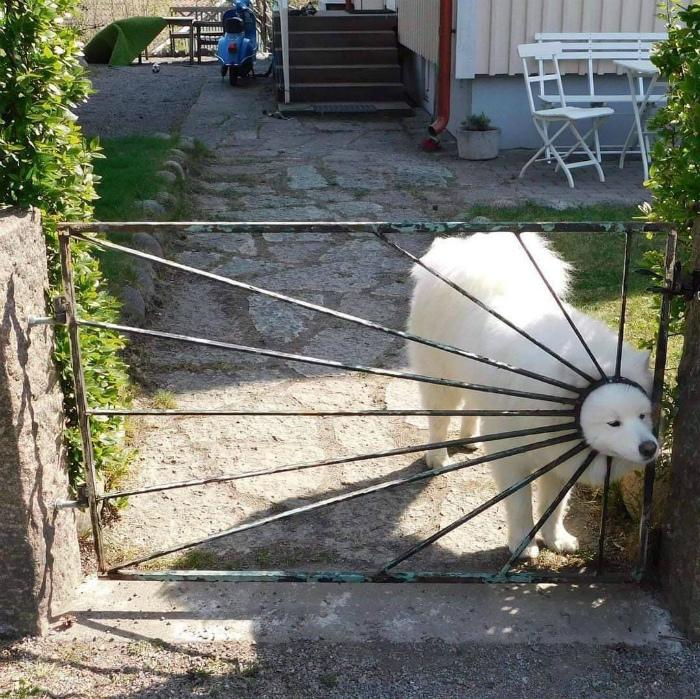 Когда ты собака, а хочешь быть солнышком! | Фото: gramha.net.