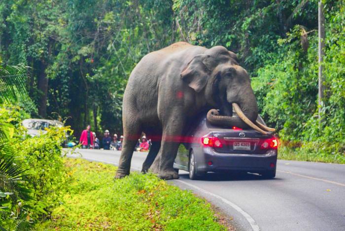 Уставший слоник встал передохнуть. | Фото: Yahoo Finance.