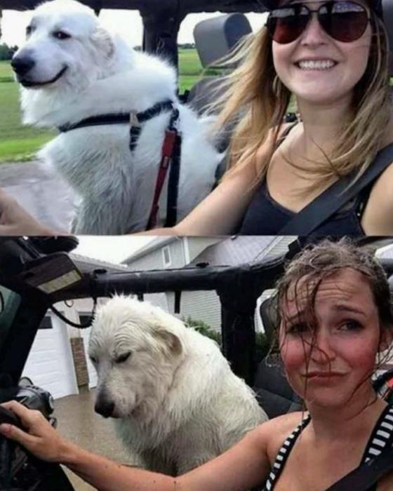 До и после прогулки.
