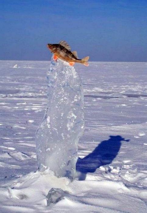 Рыбка на ледяном постаменте.
